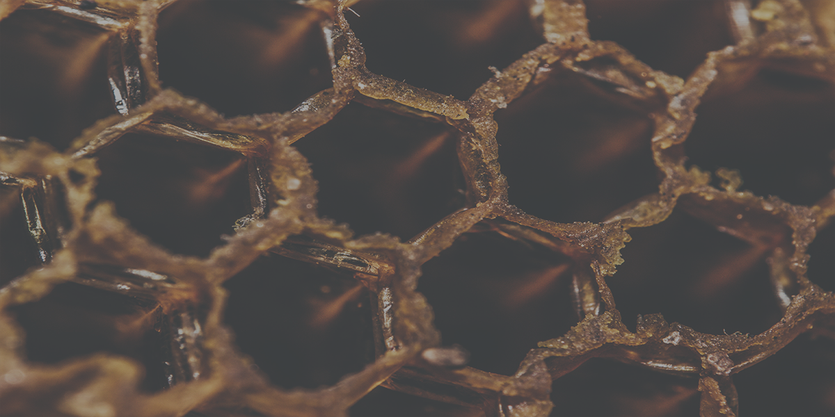 honeypot with opencanary